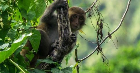 projetos de atuação do IBAMA para fauna e flora