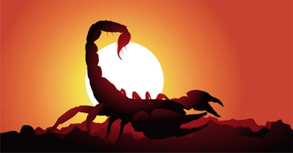 escorpiões e acidentes