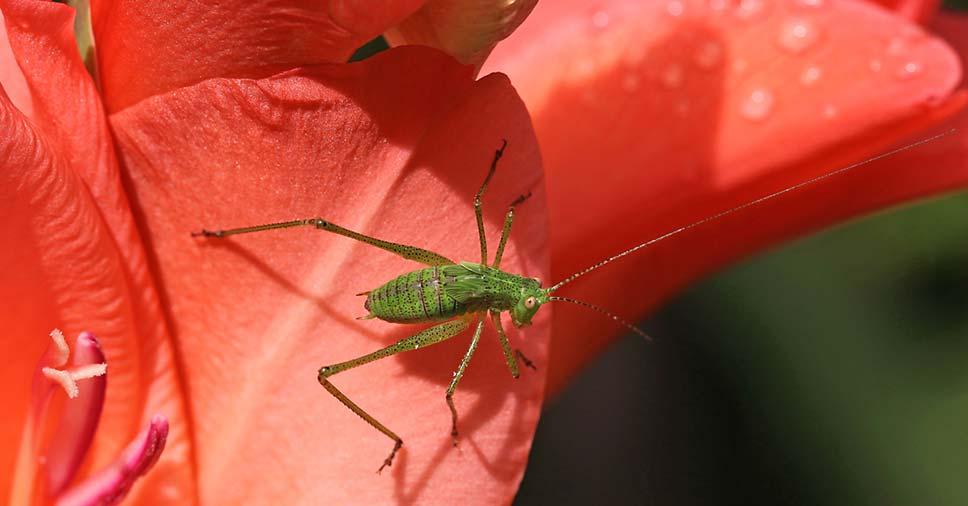 plantas que afastam insetos