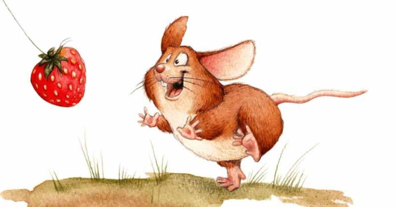 Verdades e mitos sobre ratos