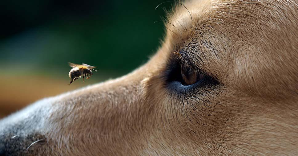 cuidar de um animal picado por inseto