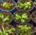 plantas-carnivoras-podem-acabar-com-os-insetos