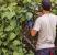 aprenda a eliminar as pragas em seu jardim