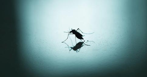 aprenda o que causa os ataques de mosquitos