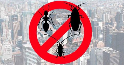 Como é feita a dedetização no controle de pragas urbanas;