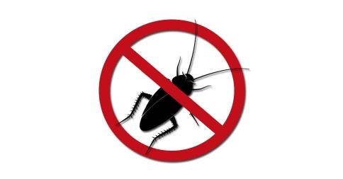 Meios para prolongar os efeitos da dedetização de baratas.