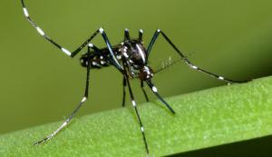segunda opção de insetos venenosos