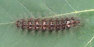 primeira opção de insetos venenosos