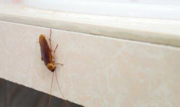 proliferação de insetos no verão