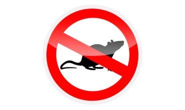 infestação de ratos em condomínio