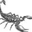 Conheça os cuidados com escorpião