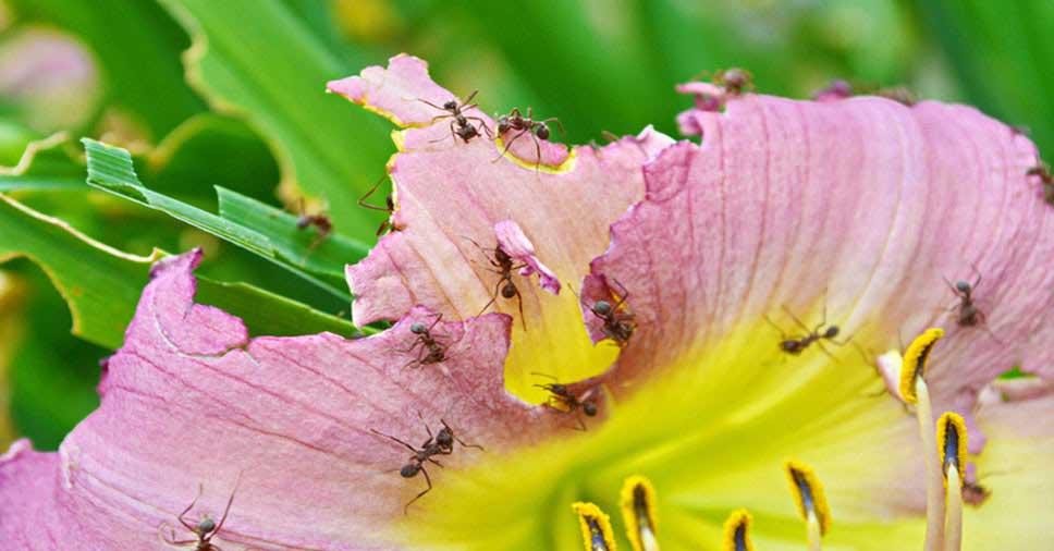 proliferação de insetos na primavera