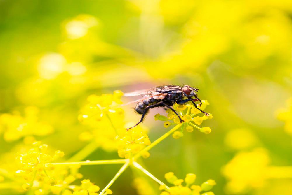 motivo da proliferação de insetos na primavera