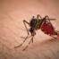 Conheça a diferença entre mosquito e pernilongo