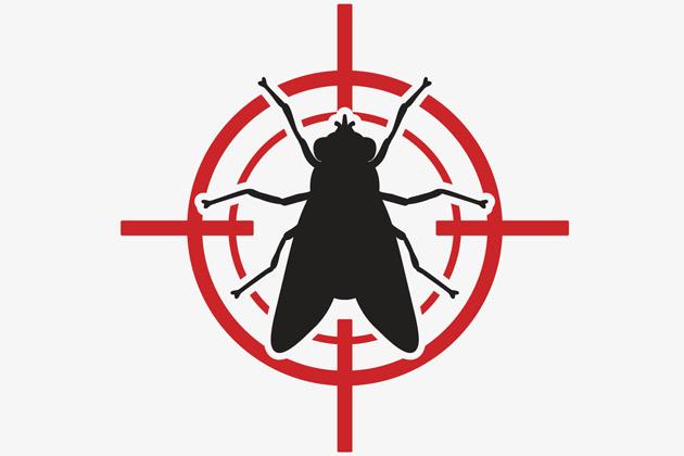 dedetização de mosca varejeira