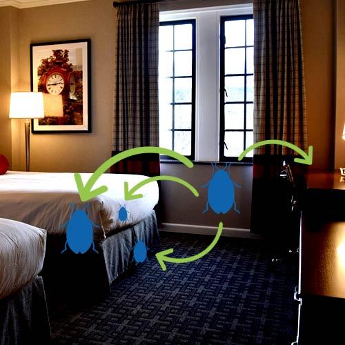 riscos da dedetização para administração de hotel