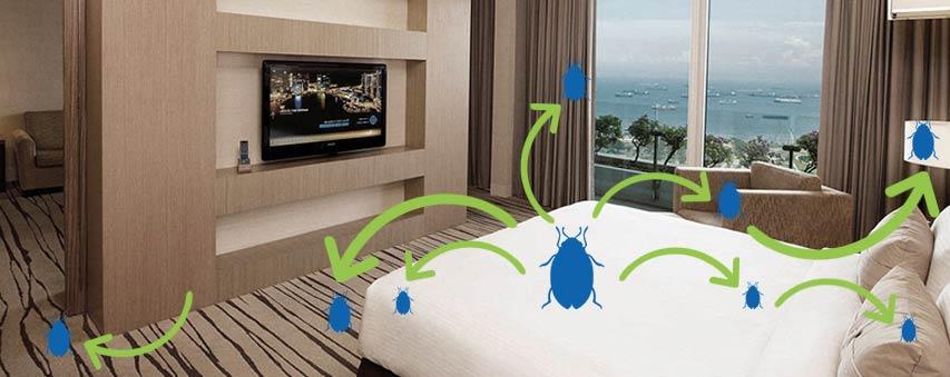 dedetizar é importante para administração de hotel