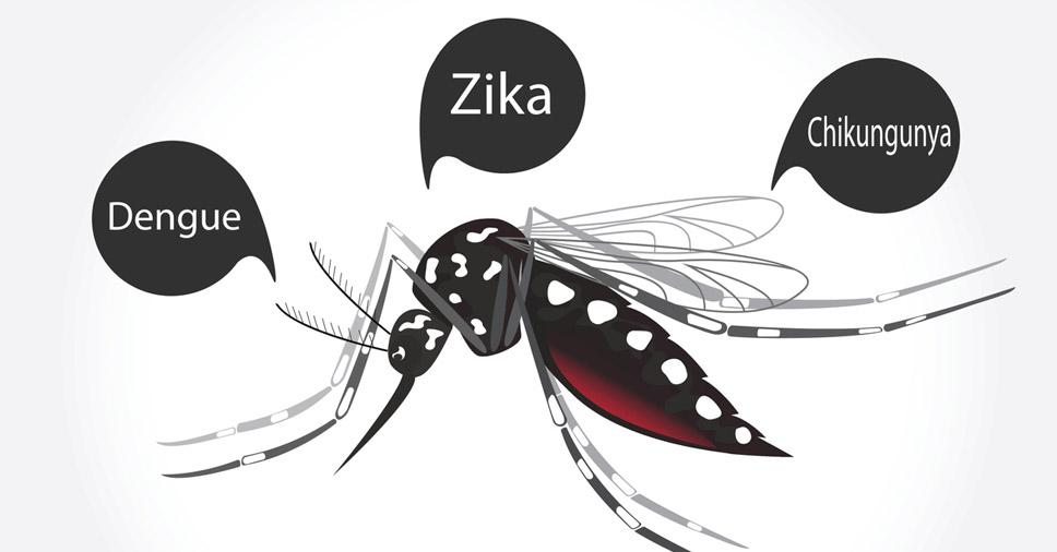 chikungunya, dengue e zika