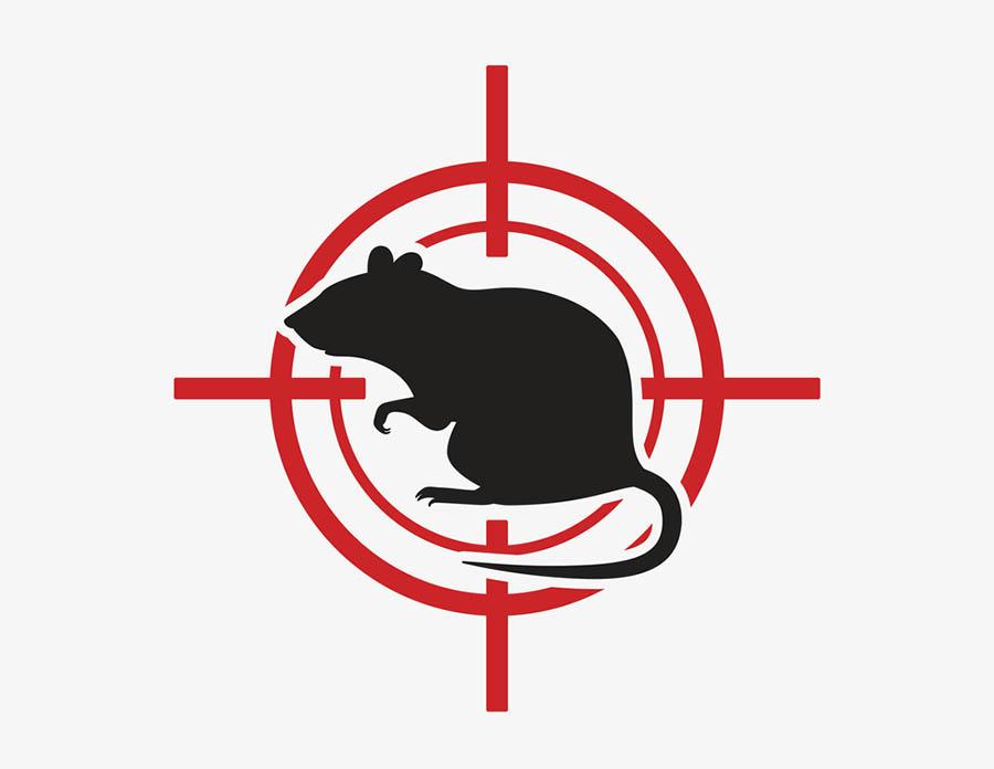 Acabar diferença entre rato e camundongo