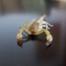 tipos de escorpião no Brasil