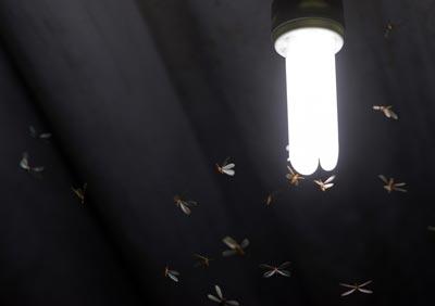 cupins de solo voando em uma lâmpada