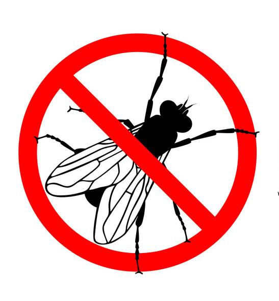 Quando uma mosca pousa na comida pode ocasionar doenças. Por isso, na imagem existe um símbolo de proibido com uma mosca dentro.