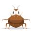 Conheça as doenças transmitidas por pulgas
