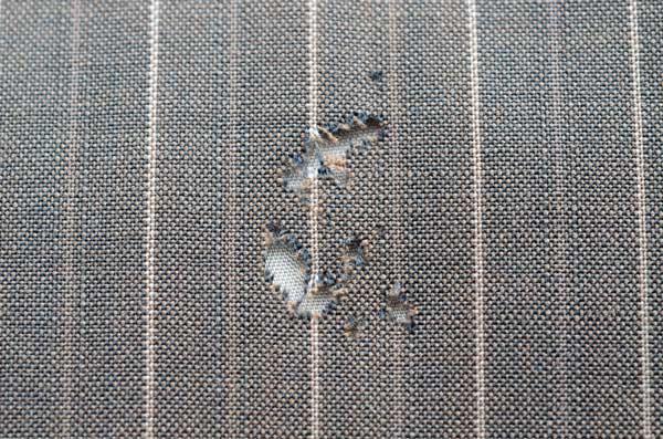 pano destruído por inseto que come roupa