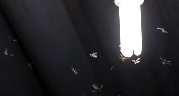 cupins de luz voando em volta de uma lâmpada
