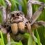 imagem de aranha armadeira na grama, uma das aranhas mais venenosas do Brasil