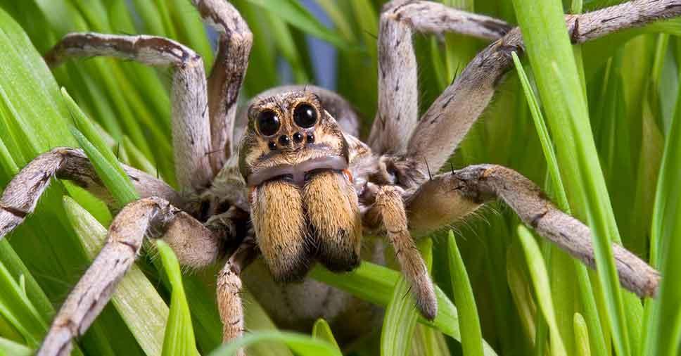 Você sabe quais são as aranhas mais venenosas do Brasil?