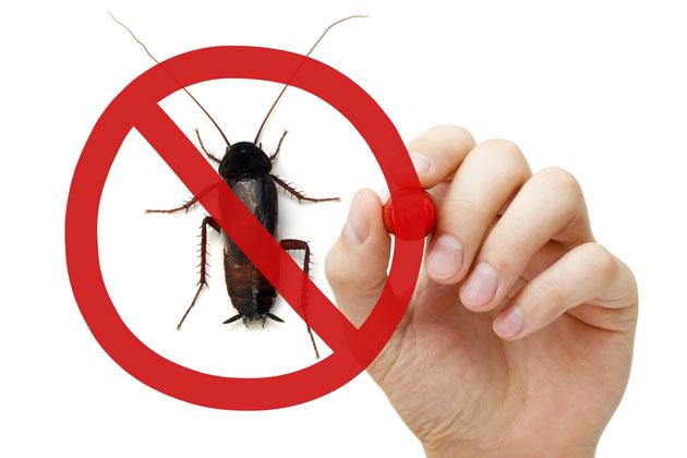 fim dos insetos com o dedetização no controle de pragas urbanas
