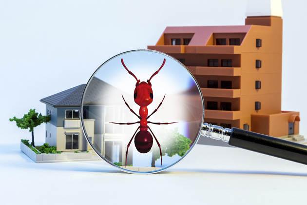 por que dedetização residencial é importante?