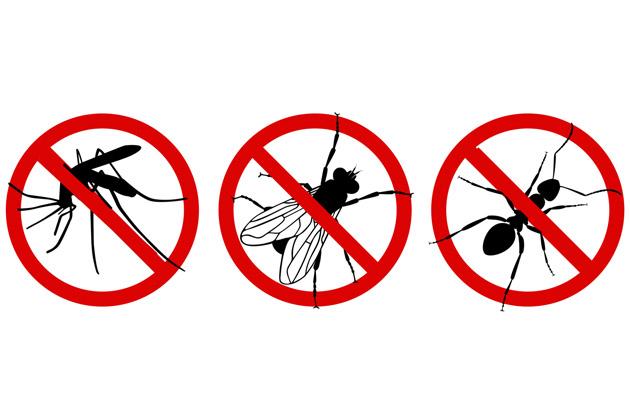 dedetizadora Insect Bye contra insetos