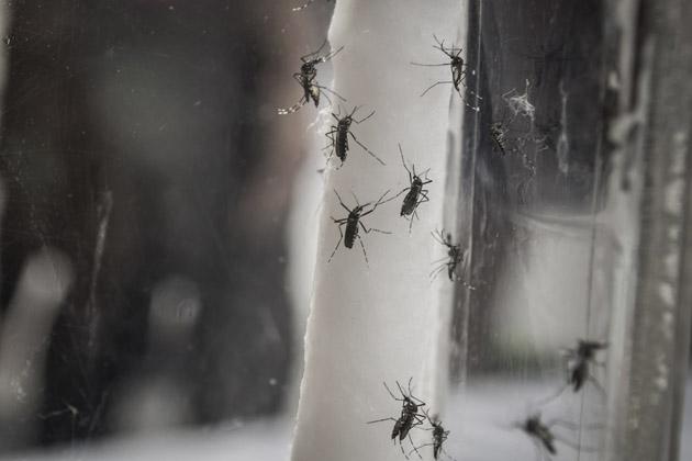 Formigas andando sobre um cano demonstrando a falta de dedetização em hospitais