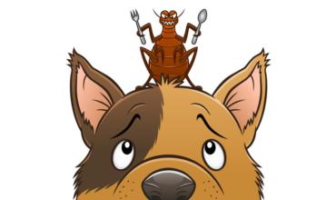 Pulga em cima da cabeça de um cachorro. Na imagem, ele está olhando para cima com o objetivo de eliminar as pulgas