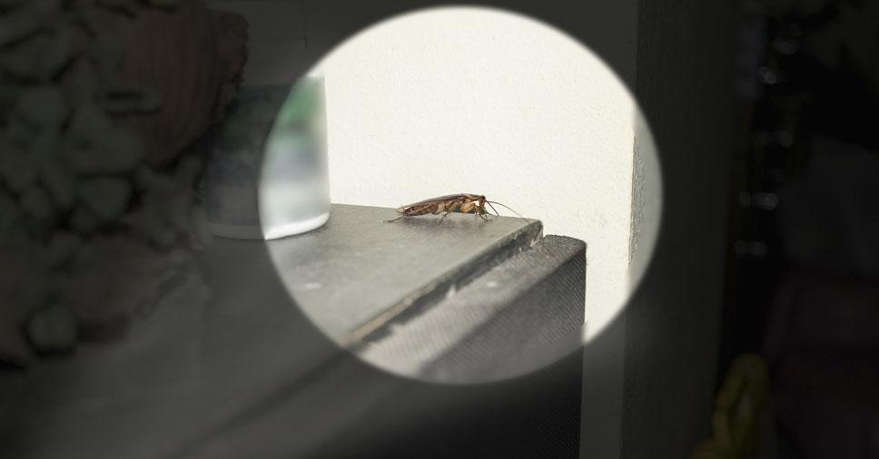 Conheça o serviço realizado por uma dedetizadora de baratas