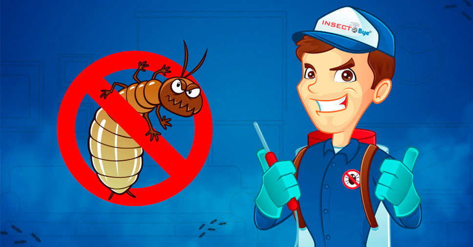 Insect Bye: há mais de 20 anos fazendo descupinização no RJ!