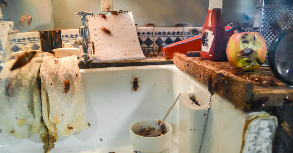 Quais são os riscos da barata na cozinha? Veja como eliminá-la!