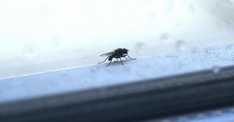 Como é o comportamento dos insetos no inverno?