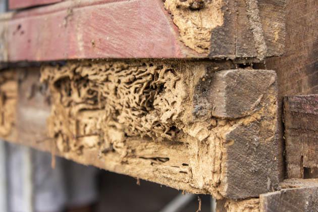 madeira estragada em casa sem serviço de descupinização