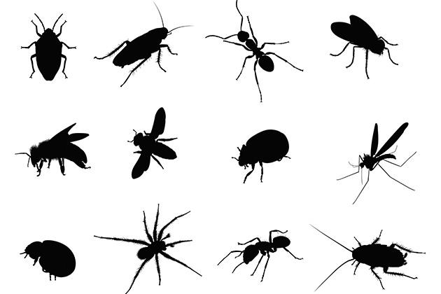 Entenda sobre os hábitos alimentares do escorpião marrom