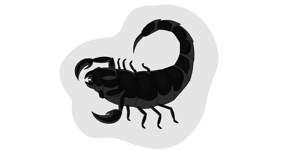 Escorpião marrom: descubra quais os perigos que ele traz consigo