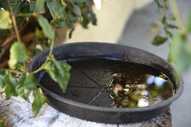 água parada em vaso de planta