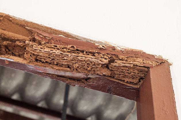 túneis de madeira na porta é um indicativo de infestação de cupins