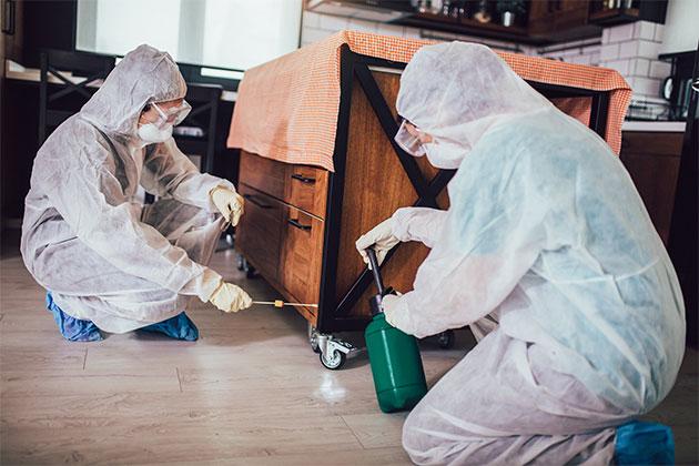 equipe especialistas em pragas ensinam como evitar aranhas em casa