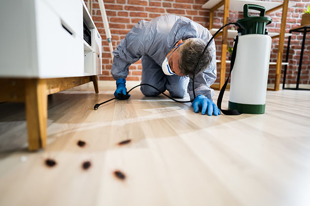 profissional da dedetização ensina como evitar baratas em casa