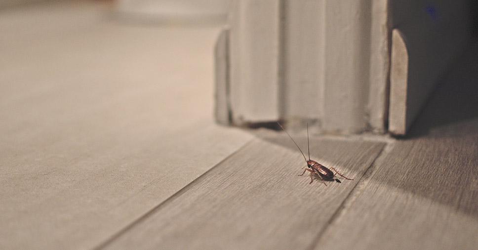 Como evitar baratas em casa? A Insect Bye revela todos os truques!