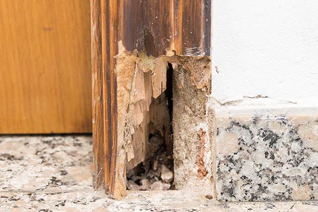 buracos feitos por cupins na porta de madeira