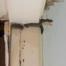 exemplo de uma colônia de cupins na porta e no teto na casa